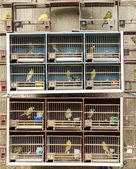 Locked in cage birds. — Stock Photo