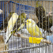 Locked in cage birds. — Stock Photo
