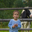 Boy and calfs — Stock Photo