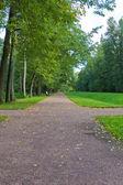 Percorso nel parco — Foto Stock