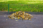 Heap of leaves — Stock Photo