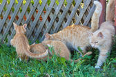 Ginger cats eat — Stockfoto