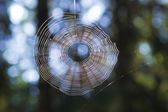 The web in the forest — Stock Photo
