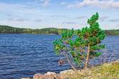 Shore of lake — Stock Photo