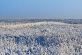 Winter field — Stock Photo