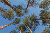 Drzew i błękit nieba — Zdjęcie stockowe