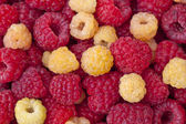 Raspberries1 — Stock Photo