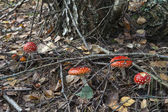Toadstools and branches — Stock Photo