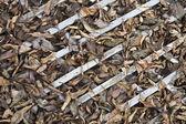 Leaves on the lattice — Stock Photo