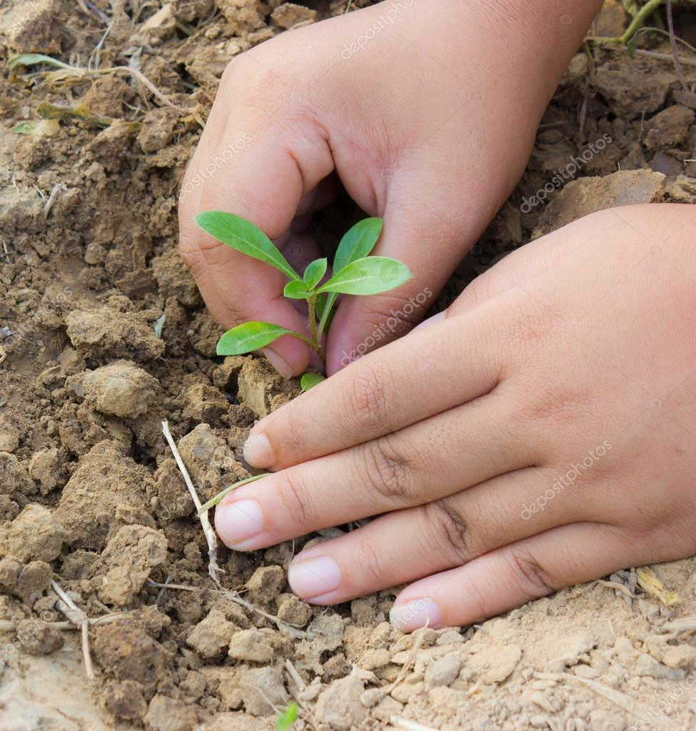 Planting tree to reduce global warming. — Stock Photo #13866797