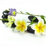 Spa stones and frangipani flowers — Stock Photo