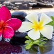 Spa stones and frangipani flower. — Stock Photo