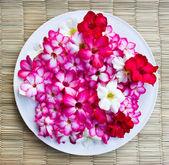 Adenium colored flowers. — Stock Photo