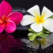 Stock Photo: Spstones and frangipani flower.