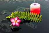 Спа камни и цветы адениумы. — Стоковое фото