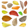 Dry leaves set . — Stock Photo