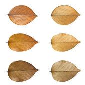 Dry leaves set. — Stock Photo