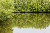 Mangrove forests in Thailand. — Stock Photo