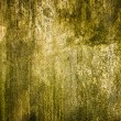 Grunge texture cement background — Stock Photo