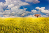 Signpost in the field. — Stock Photo
