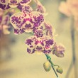Vintage new orchid species. — Stock Photo