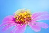 Vintage pink Flowers. — 图库照片