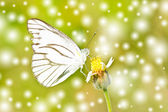 White butterfly on flower. — Stock Photo