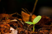 Green sprout growing.  — Stock Photo