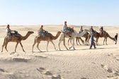 Tourists on camels in line — Stock Photo