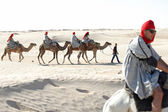 Tourists with camels — Stock Photo