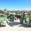 Carriages in Tunisia — Stock Photo