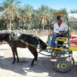 Carriage in oasis — Stock Photo #43582625