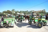 Kutschen in tunesien — Stockfoto