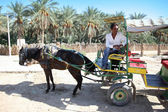 Carriage in oasis — Stock Photo