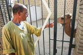 Man with camel in Tozeur Zoo — Stock Photo