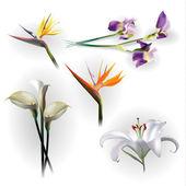 Conjunto de flores de primavera, para fins de projeto — Vetorial Stock