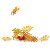 Autumn background with yellow leaves and a bunch of rowan — Stock Vector