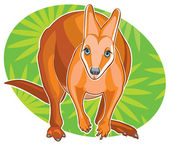 Drawing red kangaroo — Stock Vector