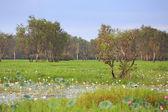Landscape of Kakadu National Park,Yellow Waters, Australia — Stock Photo