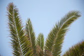 Palm Tree And Blue Sky — Stock Photo