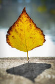 Autumn yellow leaf on a tree trunk — Stock Photo