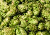 Muitos cones de lúpulo — Foto Stock