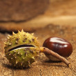 Two chestnuts on bark — Stock Photo #13689269