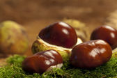 Some Chestnuts on moss — Foto de Stock