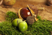 Acorns and chestnut — Stock Photo