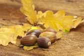 Brown acorns on foliage — Stock Photo