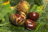 Some Chestnuts — Stock Photo