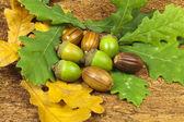 Acorn fruits on oak leaves — Stock Photo