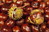 Chestnut background — Stock Photo