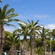 Palms along a road in Gruissan — Stock Photo #13913782